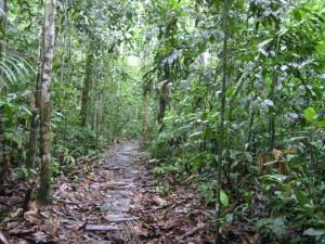 selva-peruana